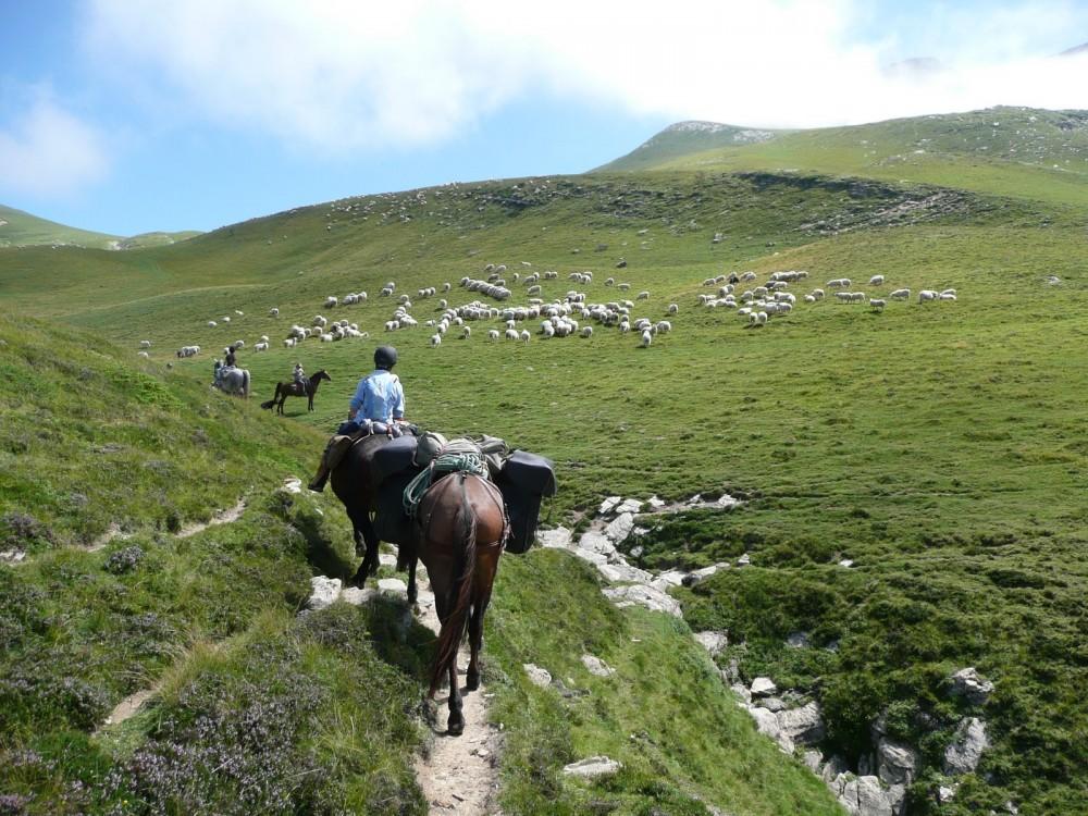 transhumance Guara Parc national des Pyrénées atlantiques