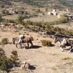 mules sur bara