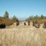 Les pâturages du Tozal de Guara
