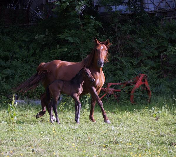 Le 4 juin 2012 : Carino fils de Quemada...