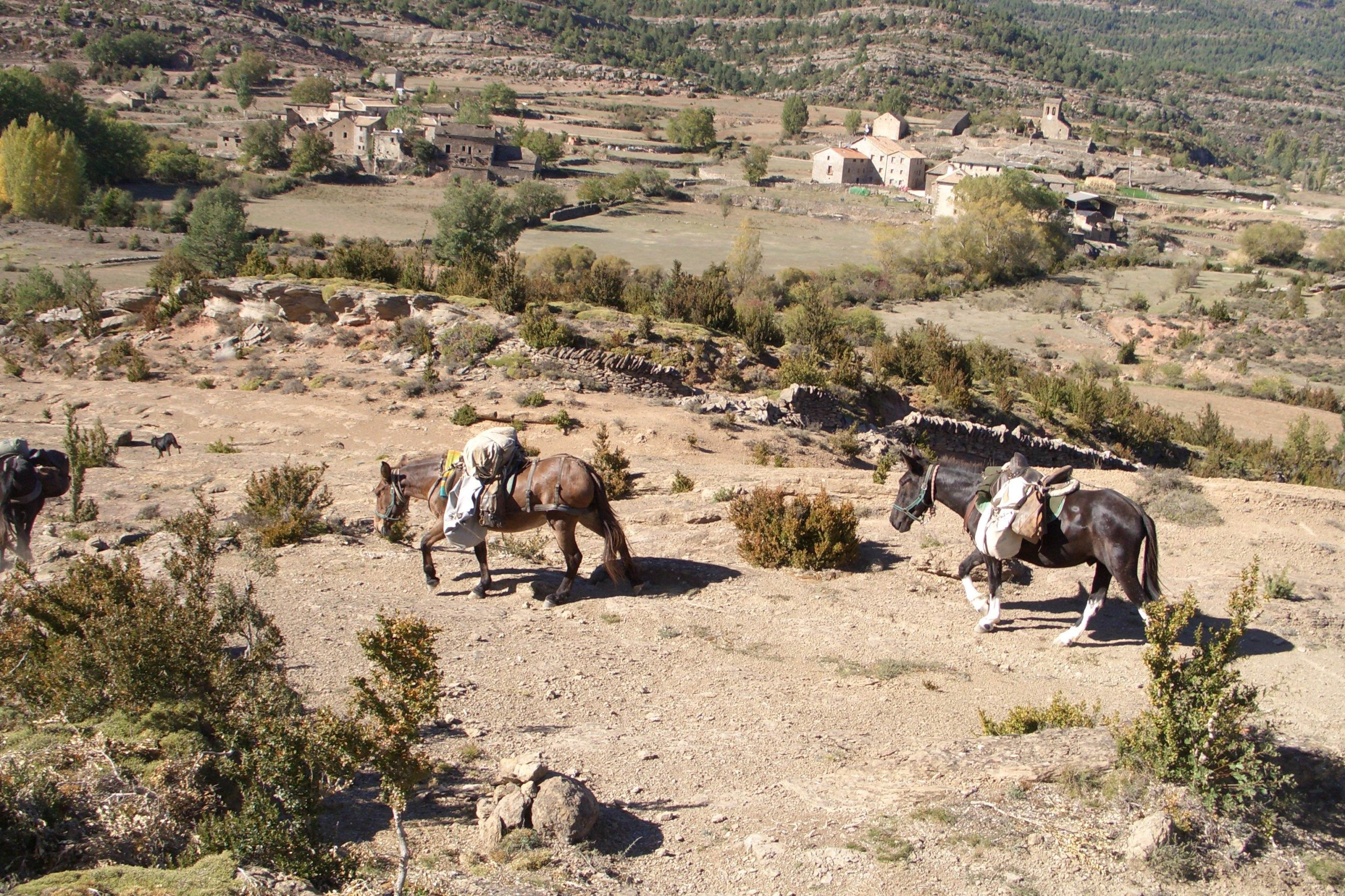 mules descendant sur bara