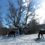 Auprès du chêne millénaire de San UrbezI