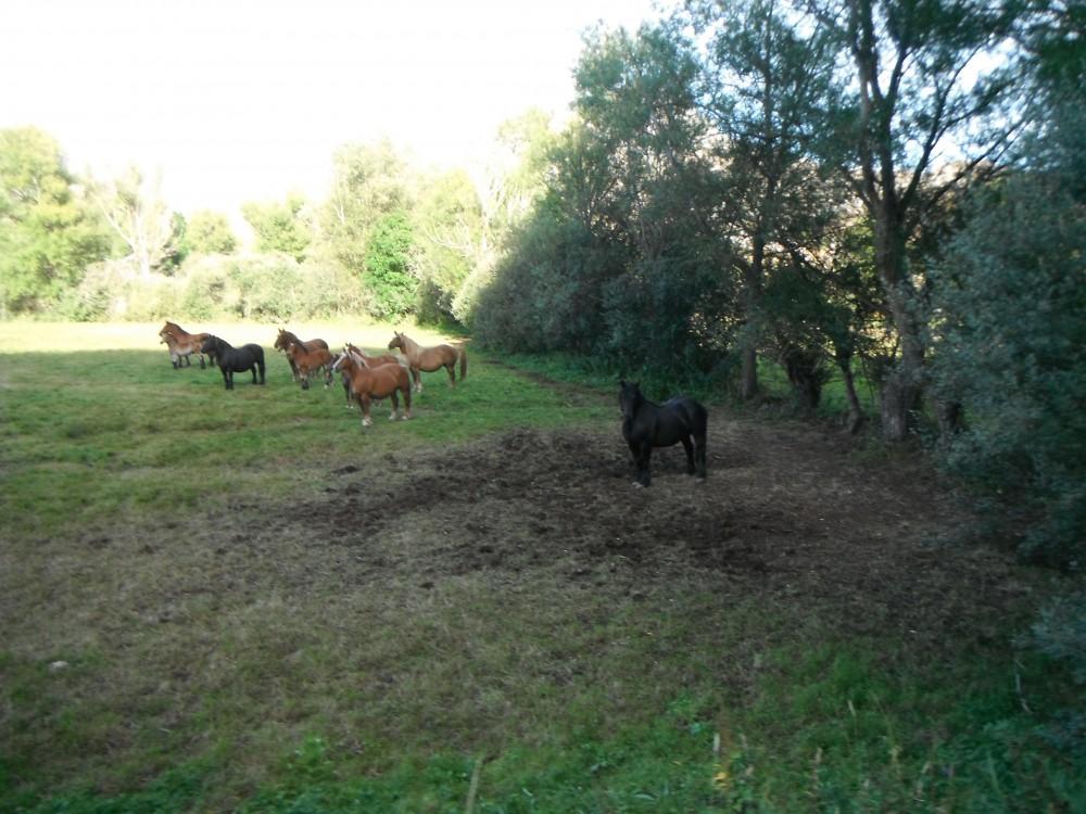 troupeaux de Santa Emiliano